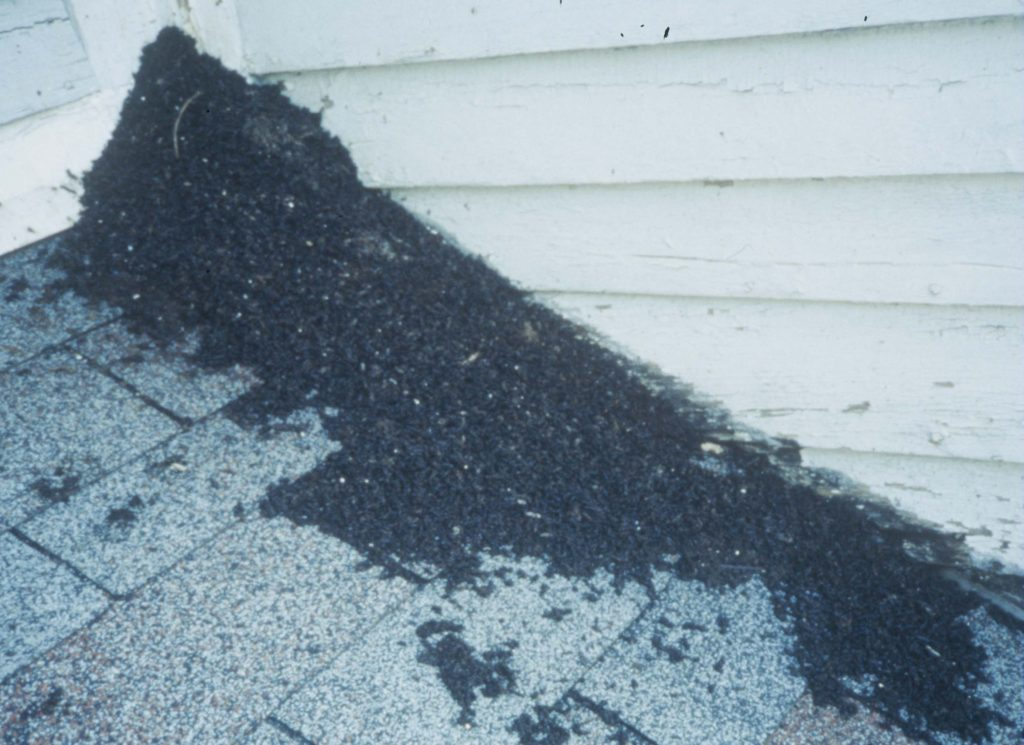 You'll often see a pile of bat droppings under the main entry hole.