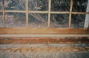 It also chewed on the window in the basement, hoping to escape that way. The squirrel chewed most of the mullions down to bare wood. See the bits of wood on the ledge?