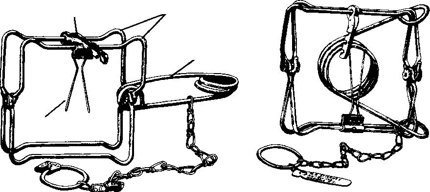 Left, body-gripping trap in set position. At right, a sprung trap.