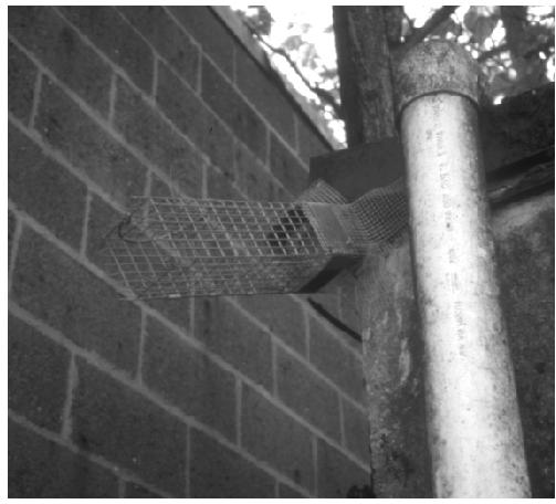 The downspout was removed so the one-way door could be installed right in the animal's travel route. Great idea! But if there are young inside, that female will be very motivated to find another way back into the house. She might damage the building to return to her young.