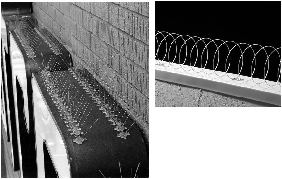 Spikes and coils turn ledges into uncomfortable roosts. (Bird-Flite® from Bird Barrier™.)